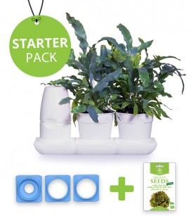 Starter Pack Salate und Aromatische von Minigarden