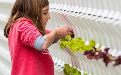 Vertikaler Minigarden-Gemüsegarten im Coruchéus-Komplex