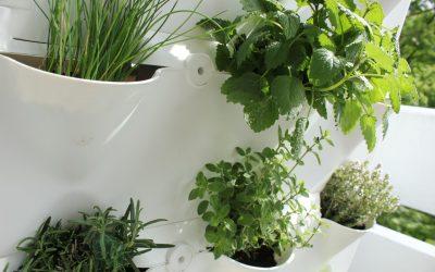 «Urbaner Gartenbau – Ein Leitfaden für Einsteiger» von Samantha Rose Hunt